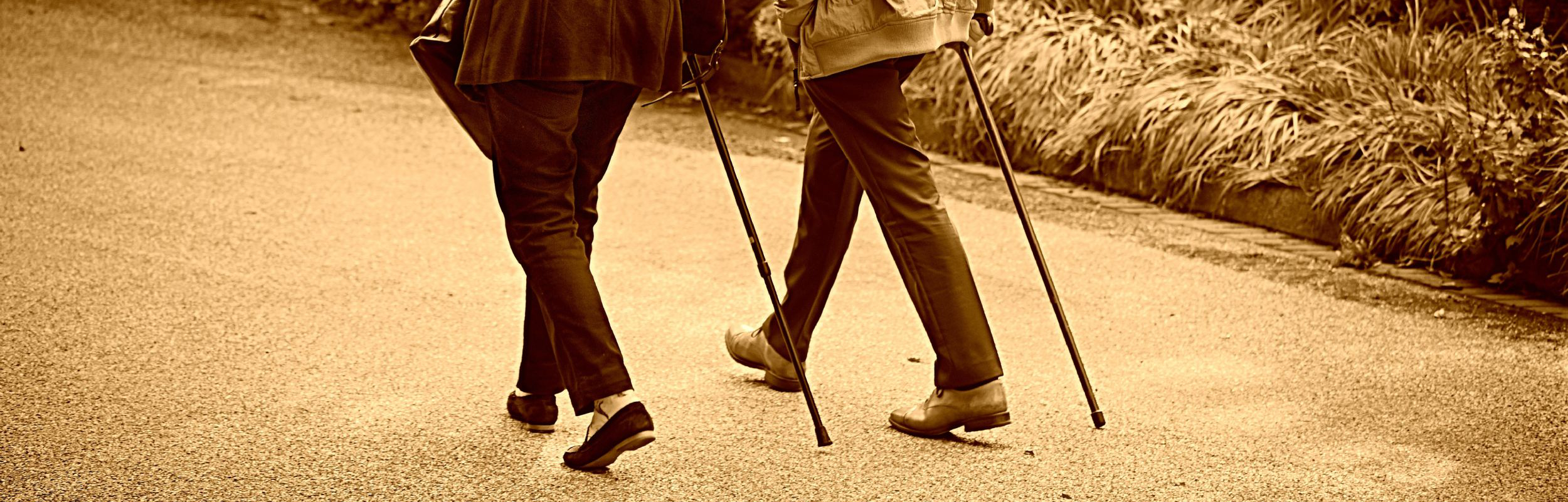 Walking sticks for everyday use