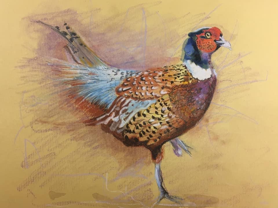 Pheasant Drawing