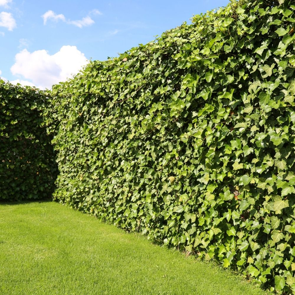 Instant hedge