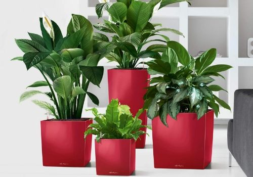 Planters and Garden Pots