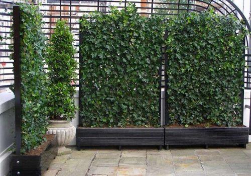Ivy Green Screens