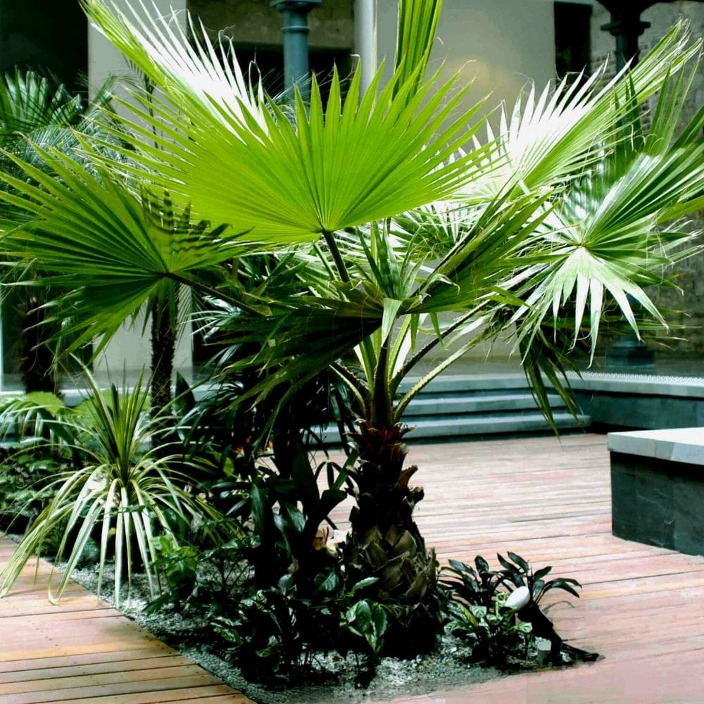 Hardy Tropical Design
