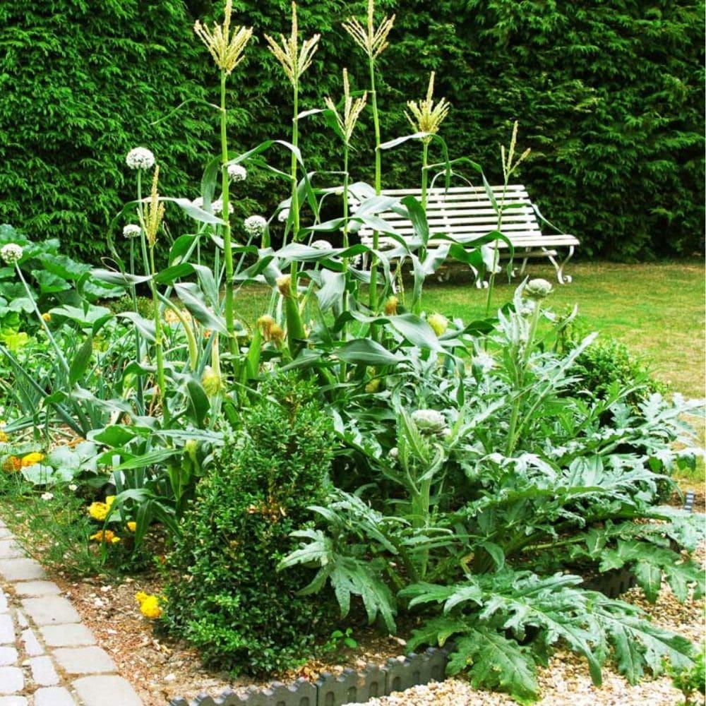 hardy tropical garden design