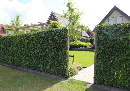 Instant privacy fence