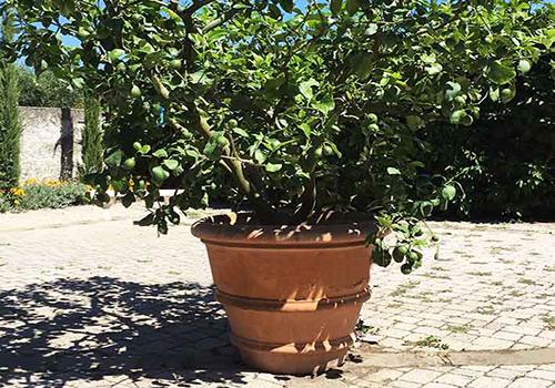 Large tree planters