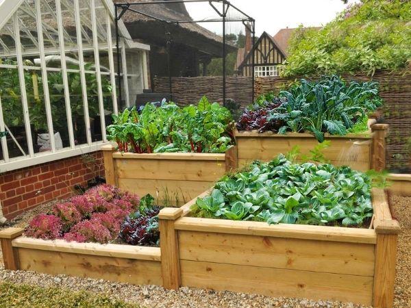 vegetable planter