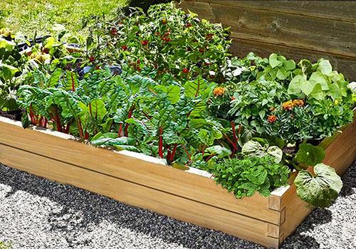 veg planters