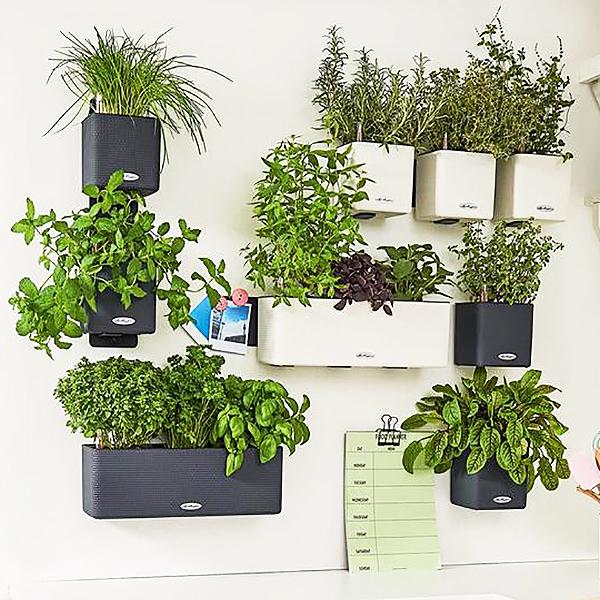 Lechuza self watering green wall