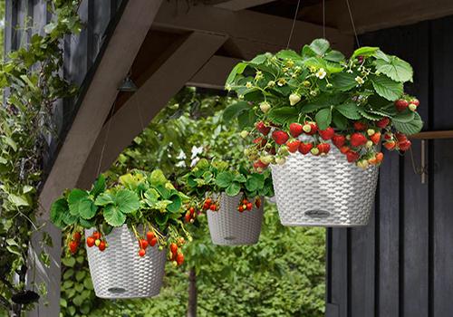 Lechuza self watering Hanging planters