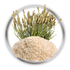 dietary fibres