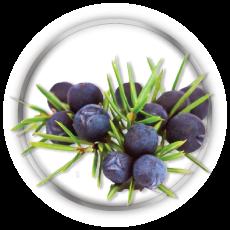 juniper berry gout hormonal balnce